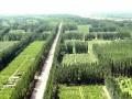 阳谷新造防护林有补贴,环境财量活力